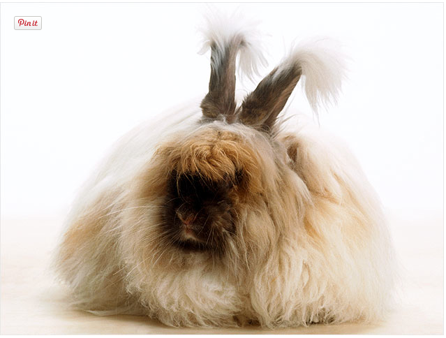 daily dose of cute worlds fluffiest bunny mamamia